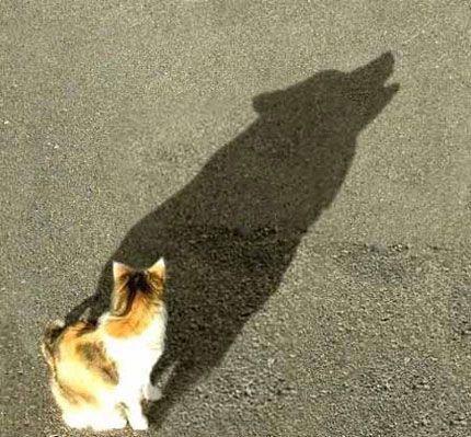 funny-cat-shadow