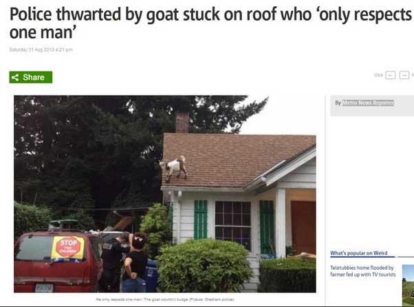 funny-goat-headline