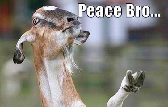 goat-funny-pics