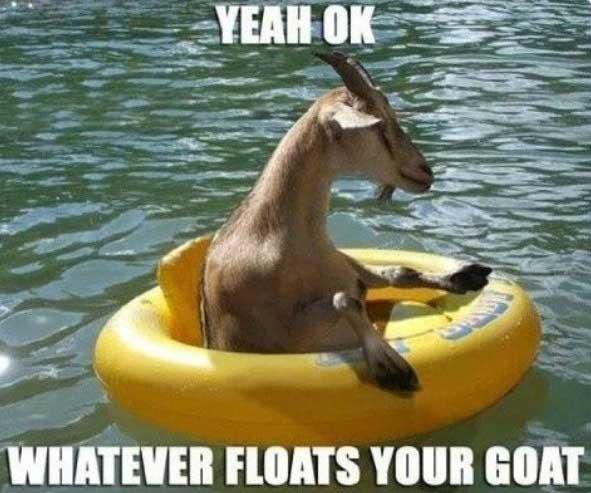 goat-memes-funny