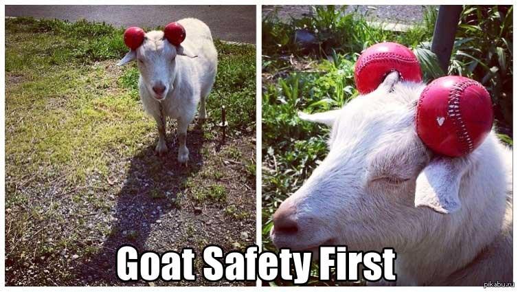 goat-safety