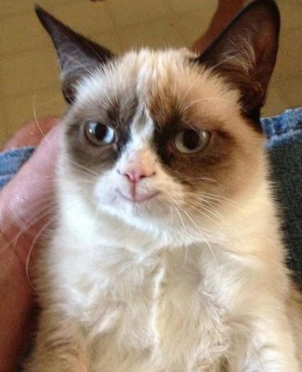 graumpy cat parallel universe
