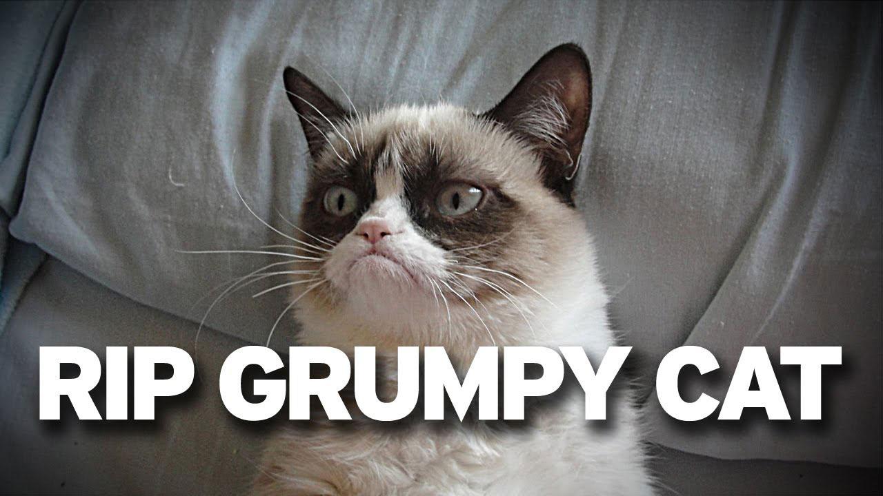grump-cat-aprril-fools-prank