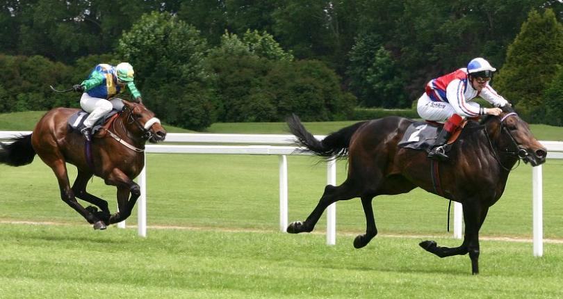 Image of: Animalswithoutnecks Horse Without Neck Youtube Animals Without Necks photos