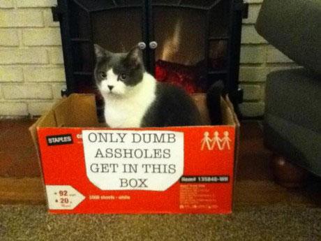 idiot-cat
