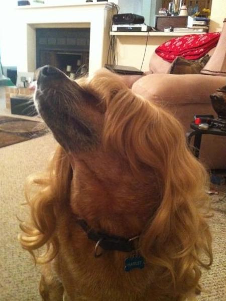 im fabulous dog