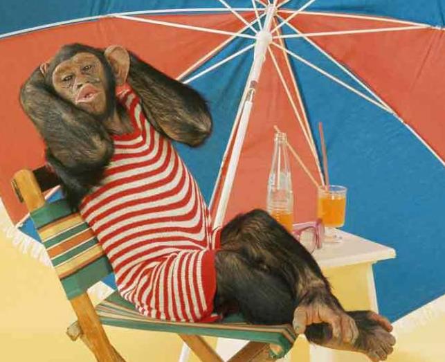 im fabulous monkey