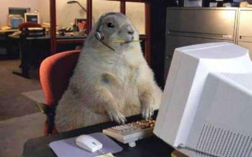internet-groundhog