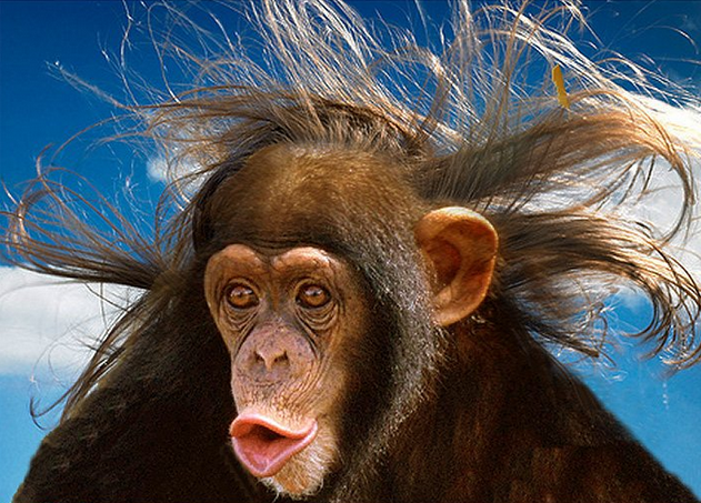 Animals With Human Hair (20 PHOTOS) | WorldWideInterweb