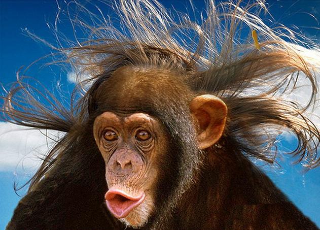 Animals With Human Hair (20 PHOTOS)
