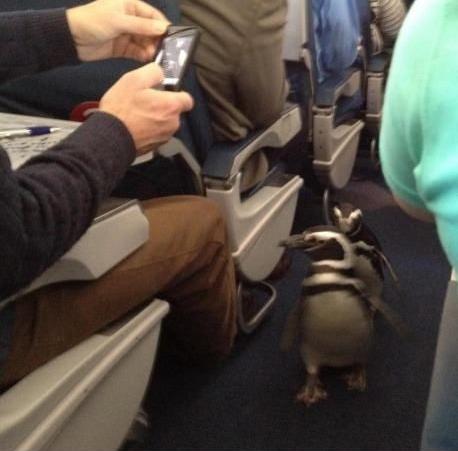 penguin plane