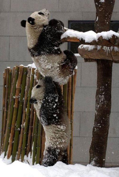 teamwork-animals