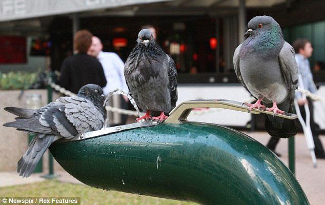 teamwork-birds