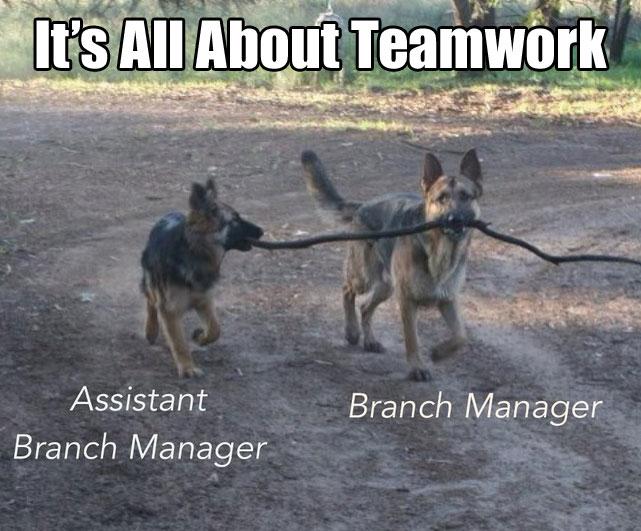 teamwork-dogs