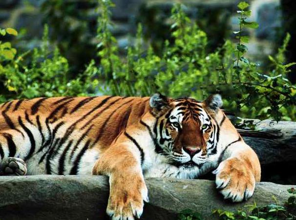 animals without necks photos worldwideinterweb