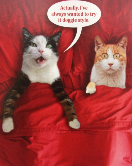 valentines day card cats