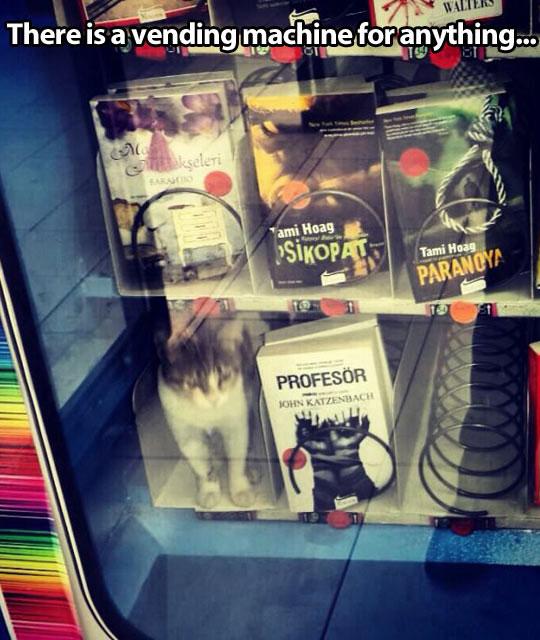 vending-machine-cat