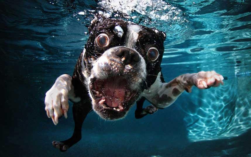 viral-dog-photos