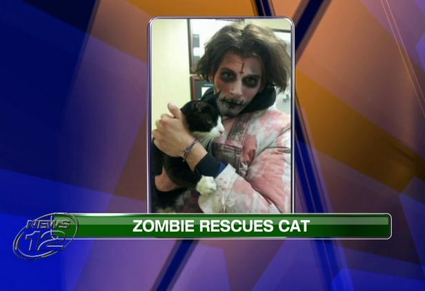 zombie rescues cat
