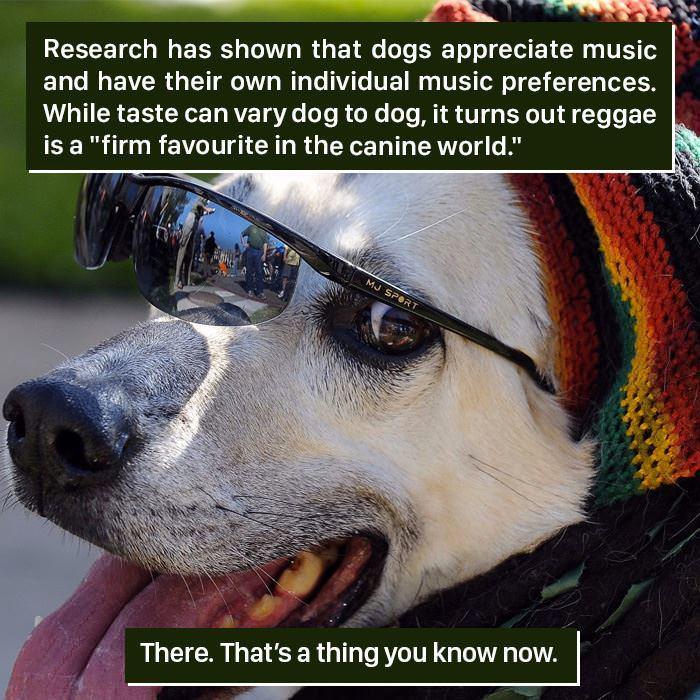 animal-facts-weird.jpg