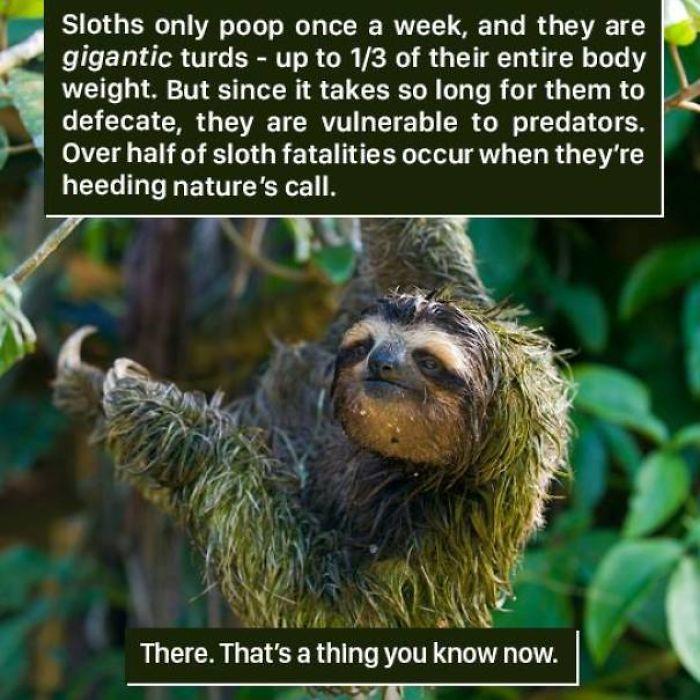 A sloth workout - 2 part 1
