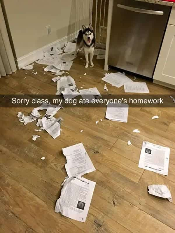 ate everyones homework funny dog meme