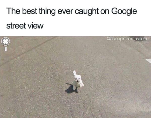 cute puppy google street view dog meme