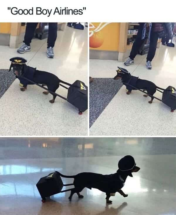 pilot dog meme