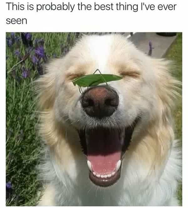 cute funny dog meme
