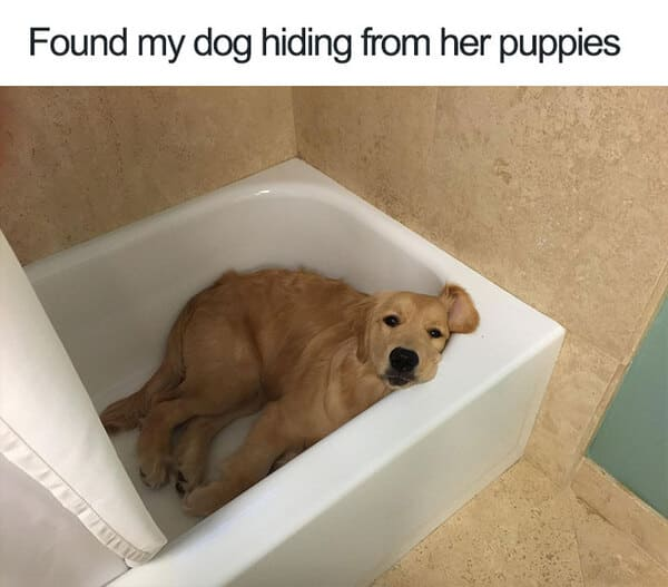 hiding from puppies dog meme