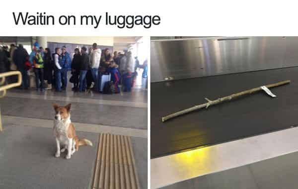 funny luggage dog meme