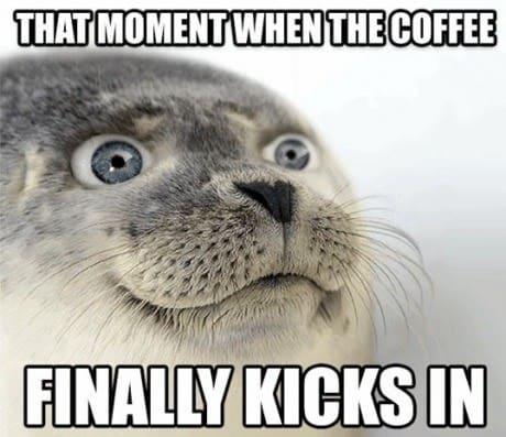 funny happy seal coffee meme