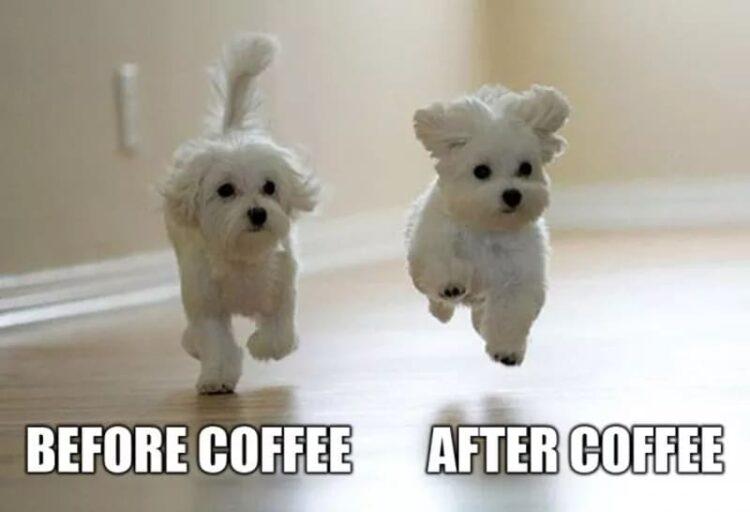 coffee makes me feel cute meme