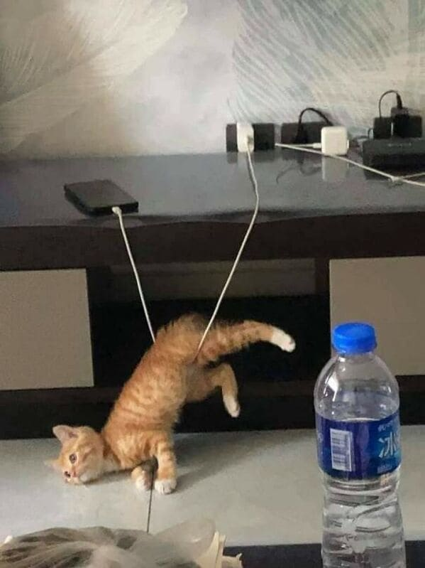 cat stuck in iphone charger, Important animal images, Funny animal photos, pics of pets doing weird and funny things, funny moments with dog caught on camera, Facebook page compiles best animal images, impanimal