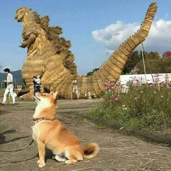corgi pretending to be godzilla, Important animal images, Funny animal photos, pics of pets doing weird and funny things, funny moments with dog caught on camera, Facebook page compiles best animal images, impanimal