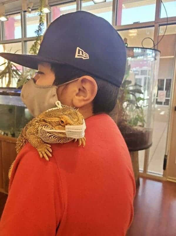 iguana with a medical mask on, Important animal images, Funny animal photos, pics of pets doing weird and funny things, funny moments with dog caught on camera, Facebook page compiles best animal images, impanimal