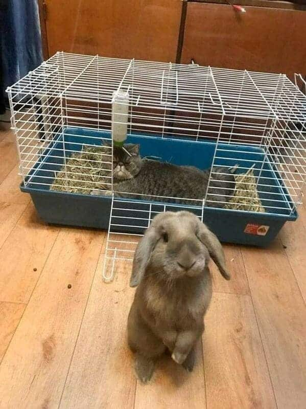 Cat sitting in rabbit cage, rabbit looks sad, Important animal images, Funny animal photos, pics of pets doing weird and funny things, funny moments with dog caught on camera, Facebook page compiles best animal images, impanimal
