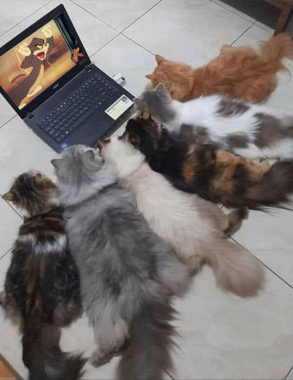 cats watching tom and jerry on a laptop, Important animal images, Funny animal photos, pics of pets doing weird and funny things, funny moments with dog caught on camera, Facebook page compiles best animal images, impanimal