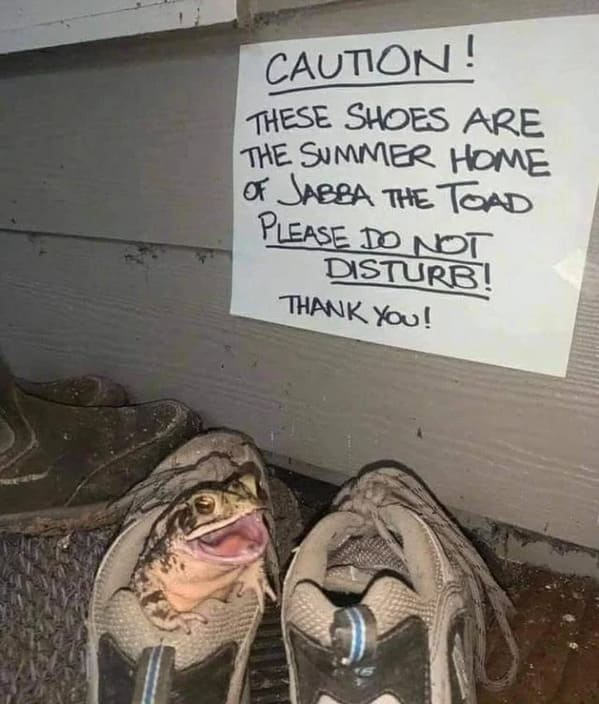 Uplifting wholesome images, nice pictures of animals and people, humanity restored, wholesome pics, reddit, r wholesome, funny cute animals, feeling good, frog in shoe