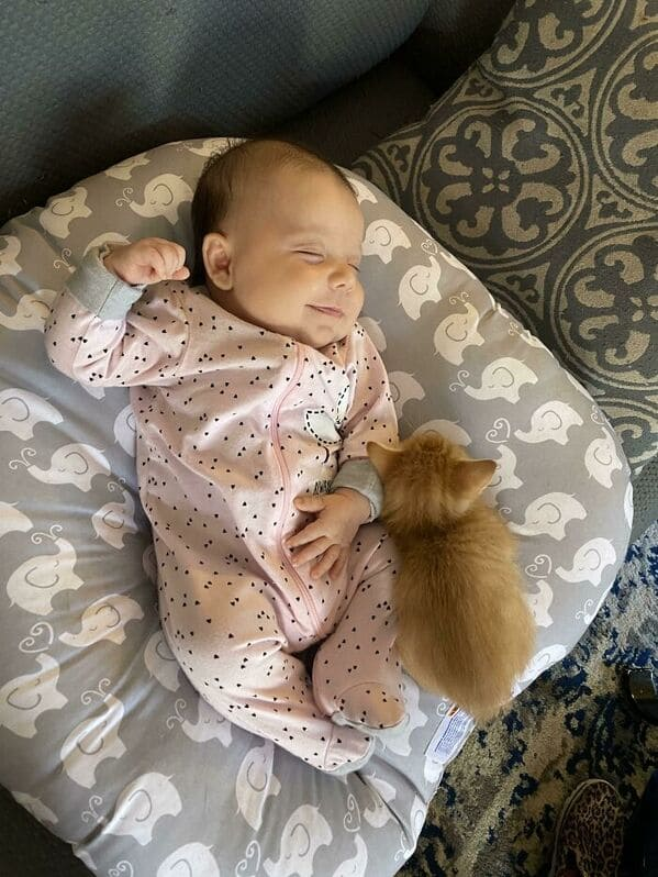 kitten and baby in a chair, Uplifting wholesome images, nice pictures of animals and people, humanity restored, wholesome pics, reddit, r wholesome, funny cute animals, feeling good