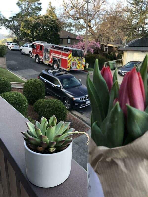 flowers on window with fire truck riding down the street, Uplifting wholesome images, nice pictures of animals and people, humanity restored, wholesome pics, reddit, r wholesome, funny cute animals, feeling good