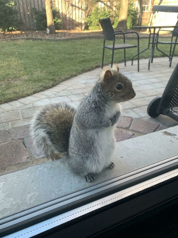 squirrel patiently waiting for food, Uplifting wholesome images, nice pictures of animals and people, humanity restored, wholesome pics, reddit, r wholesome, funny cute animals, feeling good